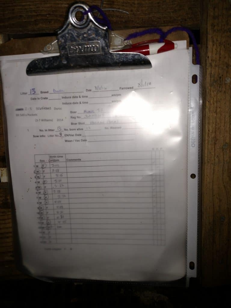 Easy Record Keeping In The Farrowing Barn For Show Pig Breeders