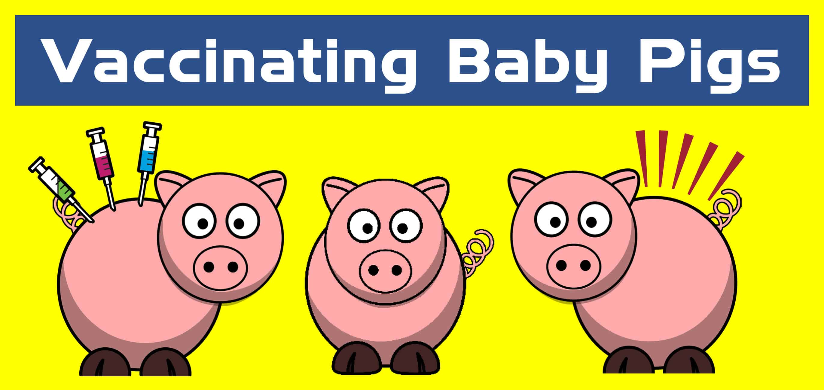 Vaccination Protocols for Baby Pigs