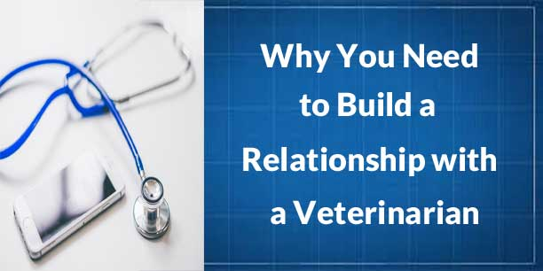 Why You Need to Build a Relationship with a Veterinarian
